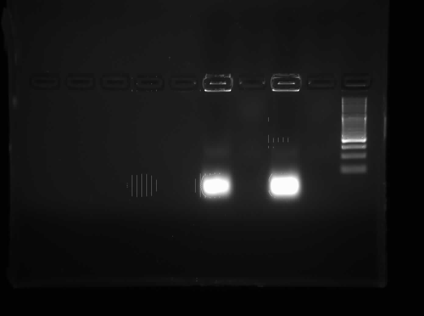 Troubleshooting PCR Part Two: What to Do When You Are Not Getting Bands - Ooooh Noooo - No PCR Bands!
